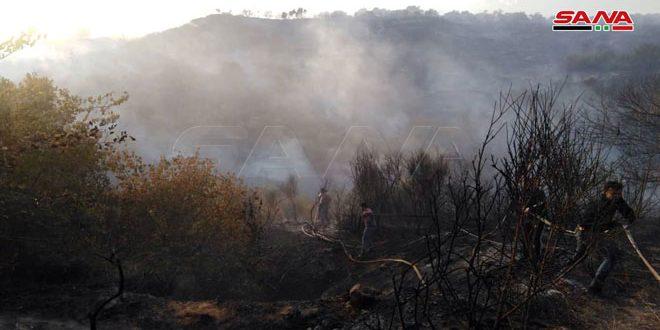 إخماد حريق بريف اللاذقية أتى على 50 دونماً من الأشجار المثمرة
